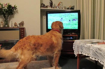 These 5 Dogs Can't Get Enough of Their Favourite TV Shows 19