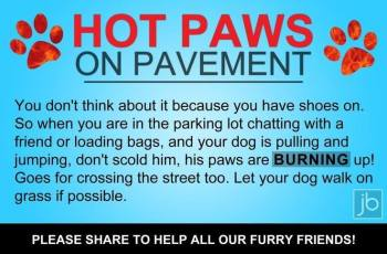 Remember to Check the Pavements to Prevent Dog's Paws Burning 1