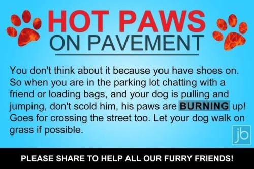 dog paws hot pavements