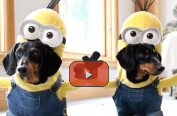 These Dogs Dressed as Minions Might be the Funniest Thing You'll See This Year 2