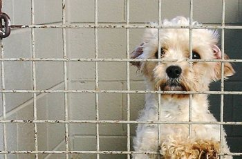 Kennel Club Hypocrisy on Puppy Farming Should Anger All 4