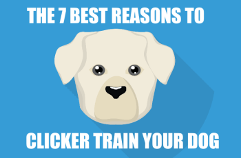 7 Best Reasons to Clicker Train Your Dog 1