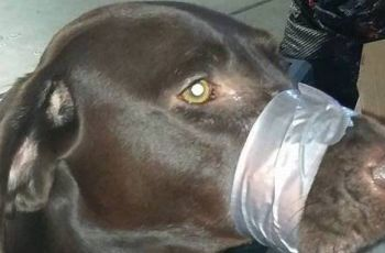 Woman Who Posted Photo of Dog With Mouth Taped on Facebook Charged With Cruelty 6