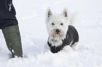 Important Advice About Cold Weather & Your Dog 5