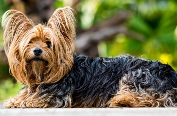 Concern Grows for Dogs at Risk of Tick-Borne Disease 3