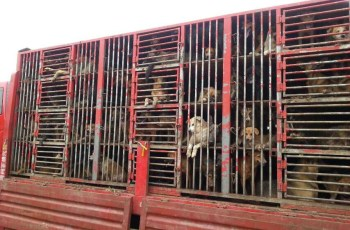 8 Million Chinese Citizens Vote Online to Support Legislative Proposal against Cruel Dog and Cat Meat 4