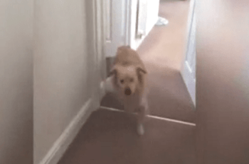 Watch This Dog Reunited With Owner After 7 Months Apart (You'll Smile, Guaranteed) 1