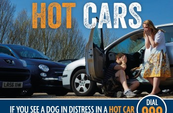 Save a Dog's Life, Share This Far & Wide: Dogs Die in Hot Cars 2