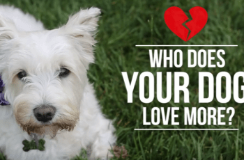 Who Does Your Dog Love More - You or Your Partner (Dare You Find Out)? 2