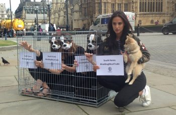 Celebrities Urging British Govt to Use Diplomatic Influence to Save up to 3 Million South Korean Dogs 2