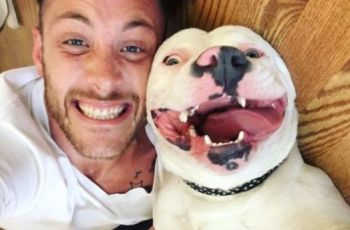 Diggy Did It! Michigan Rescue Dog Confirmed As American Bulldog & Case Dismissed 2