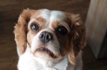 Lucy Was Rescued From a Puppy Farm But Just Look At Her Now 3