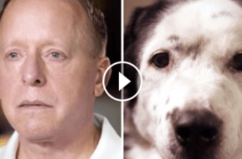 I'm Still Alive Because a Rescue Dog Saved My Life (The Video That's Got Everybody Talking) 3