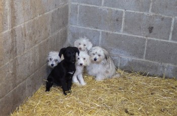 Puppy Farmers Are Jailed For Leaving Dead & Dying Dogs in a Wheelbarrow 5
