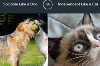 Dog or Cat: Which Animal Do You Most Identify With? 1