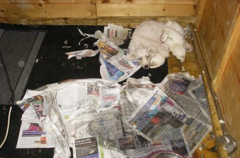 Puppy Farmers Convicted of Fraud Offences - Have They Gone to Jail? 1
