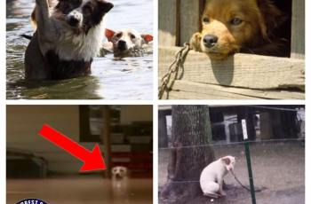 Hurricane Harvey: Do Not Tether Dogs Outside, Says Police Chief Who Fears Pets Will Drown 3