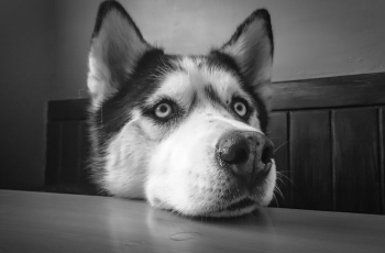 Are We Passing Our Social Anxieties Onto Our Pets? 4