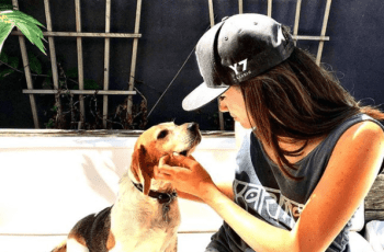 Why Did Meghan Markle Leave a Dog in Canada & How Will Guy Settle Into Life in London? 7