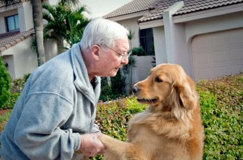 World War II Hero Irwin J. Stovroff Dies, but His Legacy Championing Dogs for Veterans Lives On 2