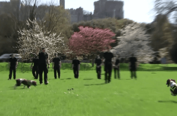Meet The Dogs Working to Protect Everyone's Safety at Royal Wedding 4