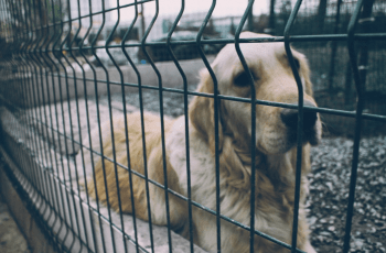 Solicitor General to Personally Fight For Longer Jail Terms for Puppy Farmers 1