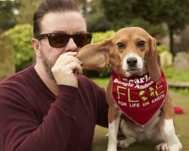 Beagle Saved from Animal Testing Wins 'Inspirational Animal' Award 2
