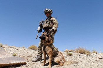 Meet the Australian War Hero Dog Who Has Just Received An Award for Saving Lives 2