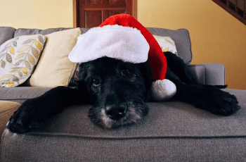 Is It Safe For Dogs to Eat Leftover Christmas Turkey? 8