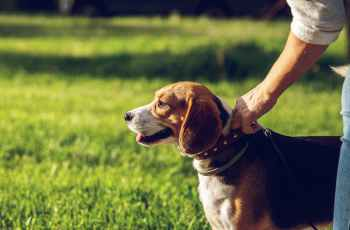 Life After Loss & Divorce: Pets Make People Less Lonely, New Study Finds 43