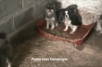 What Has Wales Done to Address Its Puppy Farming Problem? 15