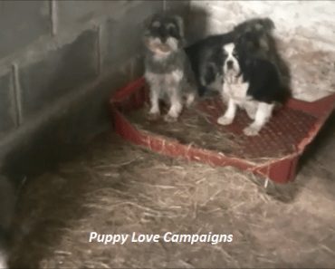 What Has Wales Done to Address Its Puppy Farming Problem? 11