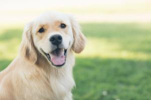 MCT Oil Could Help Dogs With Hard to Treat Epilepsy, New Study Reveals 2
