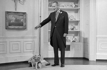 Joe Biden's Rescue Dog Joins Long Line Of Political Pets 5