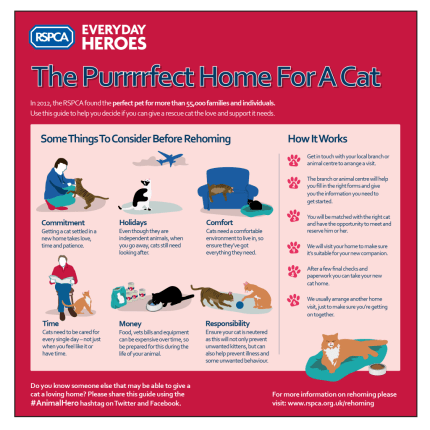 Rehoming_Guide_Cats