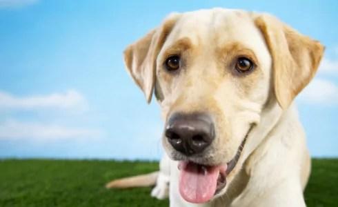 Proper Dog Nutrition