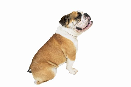 Are carbs making your dog fat