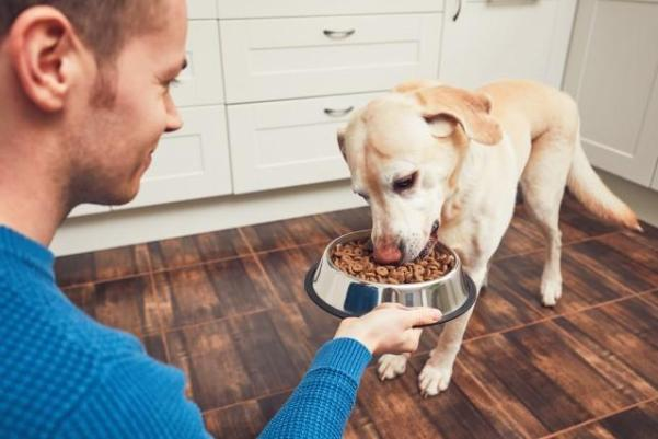 null food for dogs with anxiety