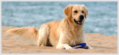 Dog Training & Dog Boarding