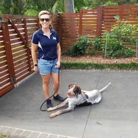 dog boarding and training sydney