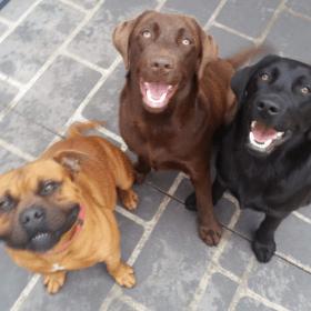 Dog trainer sydney
