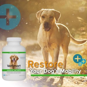 vitamins for healthy dog