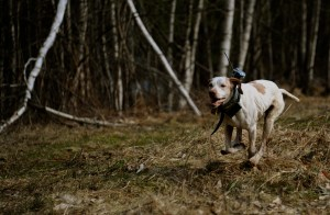 Running with GoPro camera