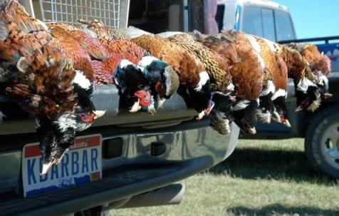 Pheasant opener in South Dakota