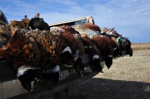 South Dakota's Pheasant Opener