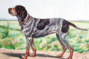 The Württemberger pointer, from Craig Koshyk's Pointing Dog Blog