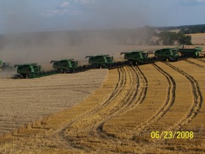 Combines working wheat.