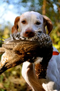 The reward - Puck with a fresh grouse