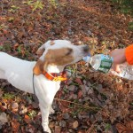 Learning to be a hunting dog