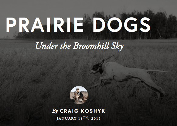 Prairie Dogs Under the Broomhill Sky, by Craig Koshyk